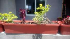 maceta decorativa con plantas incluidas