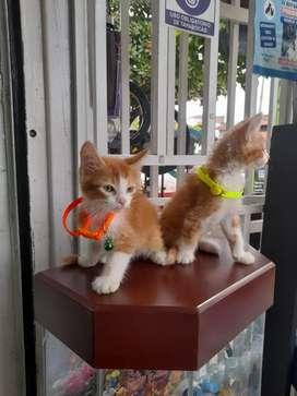 Lindos  gatos   crusados