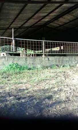 FINCA AGRICOLA GANADERA  A 15 MINUTOS DE ZAMORA 50 HECTAREAS