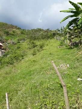 Lote en la buitrera ( palmira)