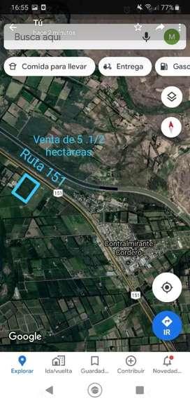 Se Vende 5 Hectareas en Cte. Cordero, predio desmontado, sobre ruta 151. Río Negro.