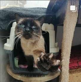 Hermosos gatos en adopción