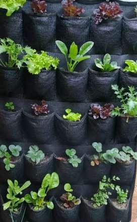 Cultiva tus hortalizas y aromáticas