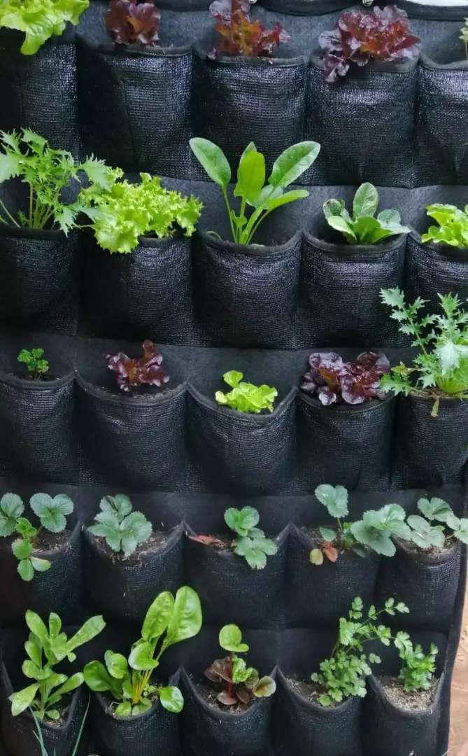 Cultiva tus hortalizas y aromáticas 0