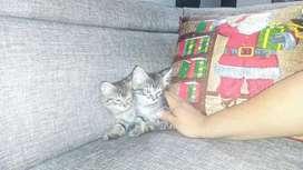 Gaticas buscan hogar!!