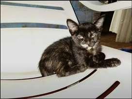 Adopcion de gatitas