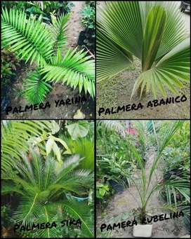 Todo plantas