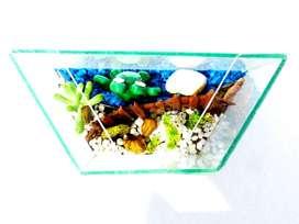 Terrarios de vidrio con plantas