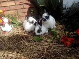 Conejos Enanos Bonsai