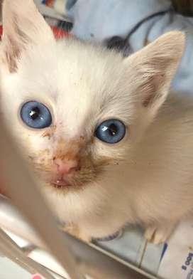 Gatos bebes en adopcion