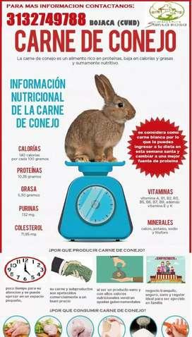 Venta de conejos para reproducción carne y conejasa