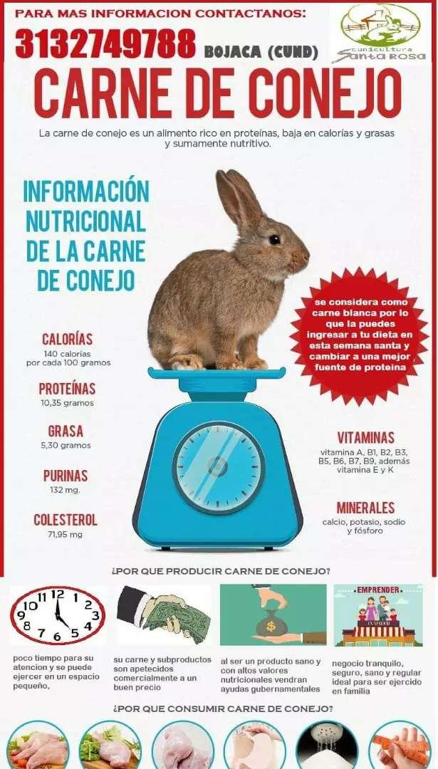 Venta de conejos para reproducción carne y conejasa 0