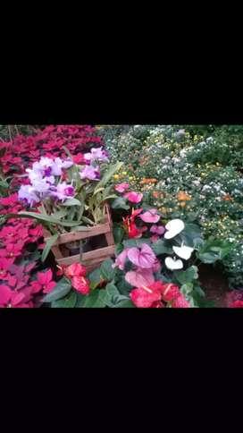 Vendo plantas de exterior y interior y frutales y aromáticas panteras de todo los tamaños y abono bueno