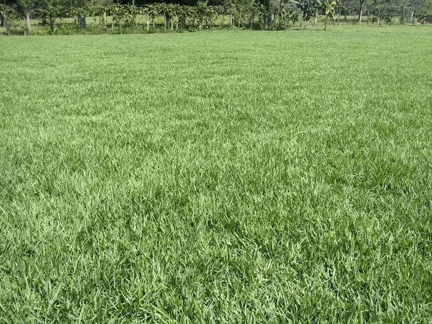 Venta y siembra de grama 0