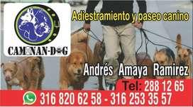 ADIESTRAMIENTO,GUARDERIA  PASEO CANINO.