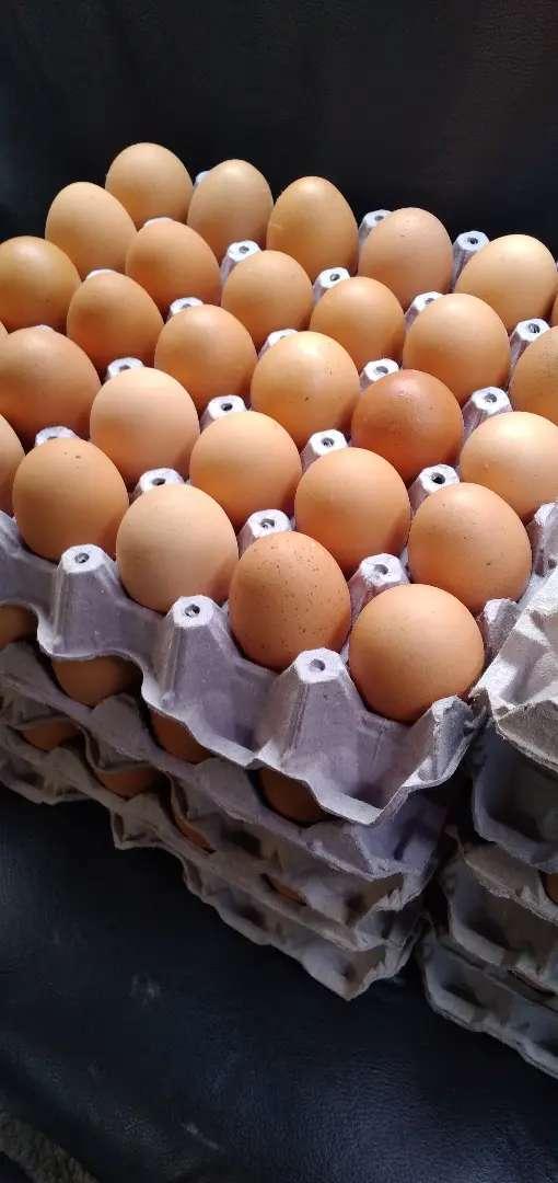 Vendo huevos 0