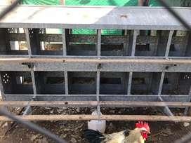 Vendo nidal para gallina