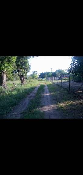 Venta de Lotes (Ensenadita-San Cosme)