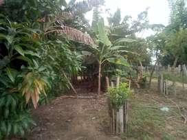 Gangazo Vendo Finca En El Guamo Tolima