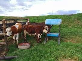 se venden hermosos y practicos saladeros para ganado