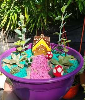 Mini jardines de cactus y suculentas