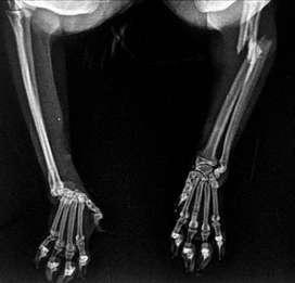 Fracturas Cali realizamos todo tipo de cirugía de Ortopedia y tejidos blandos para mascotas Veterinaria de avanzada