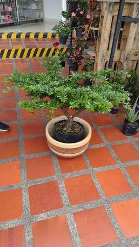 Vendo Hermosas Plantas de Interior y Exterior desde $5.000