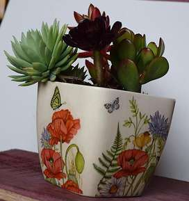 Macetas Decoradas - Incluye Las Plantas Suculentas
