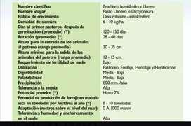 Semilla de pasto Humidicola Llanero x kilo