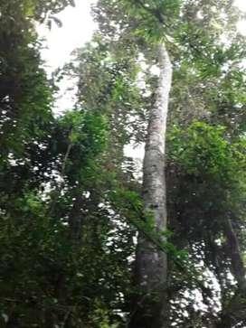 Vendo bosque virgen