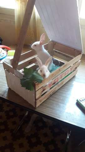 Hermosos conejitos d todo tamaños y tambien fainados