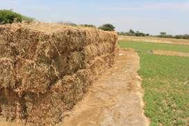 heno de alfalfa para caballos