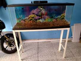 Acuario y base metalica