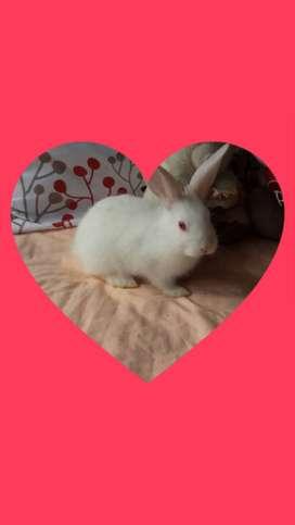 Amigos conejos