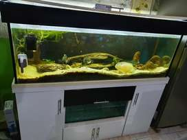 Vendo Acuario, más peces y filtro canister