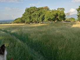 Venta de Finca Agropecuaria Piedras-Tolima