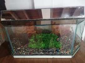 Vendo acuario usado