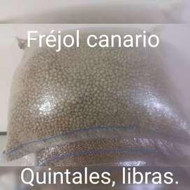 Fréjol canario