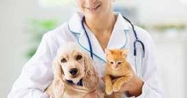 Se busca Medic@ Veterinari@