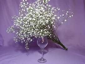 Flor Gypsophila Mirabella Natural - Tallos Secundarios