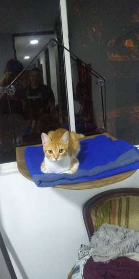 repisa gatos para vidriera