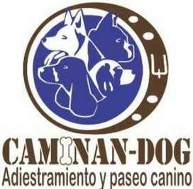 SERVICIO DE ADIESTRAMIENTO, PASEO  GUARDERIA CANINA