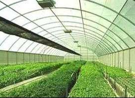 Se necesita persona para trabajar en vivero con experiencia en germinacion y cosecha de plantulas