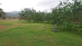 Se vende Quinta productiva sector los Bajos de Montecristi ideal para siembras de ciclos corto