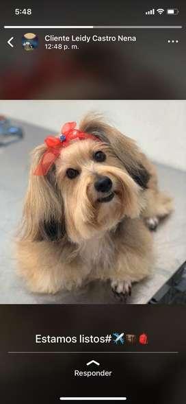 Se requiere peluquero o peluquera canina
