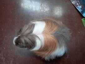 Cobayos de pelo largo o angora raza peruano y sheltie