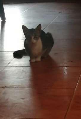 Adopción gato