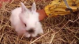 Venta de conejitos mascota no te quedes sin el tuyo