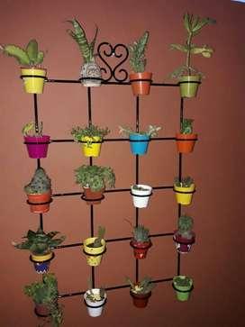 Porta Cactus para 20 Macetas