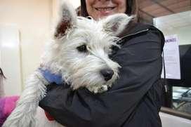 Cachorros Westy y más razas Criadero Canino